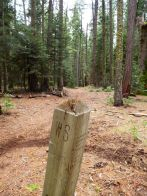 WS post at Deadwood