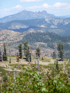 View of Sierra Buttes from Grouse Ridge. Downieville is thataway.