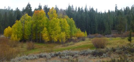 More aspens off Henness Pass Rd.