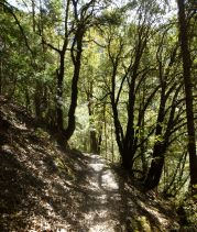 The South Yuba Trail