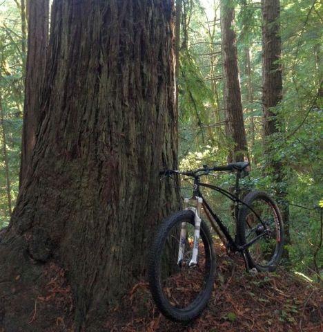 Aptos_Knard-tree