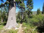Descending Jamison Creek Trail